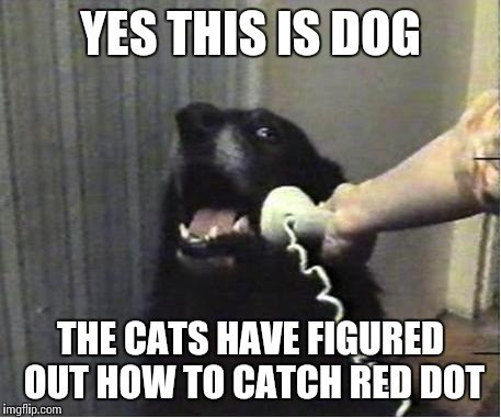 Photo caption - YES THIS IS DOG THE CATS HAVE FIGURED OUT HOW TO CATCH RED DOT imgflip.com