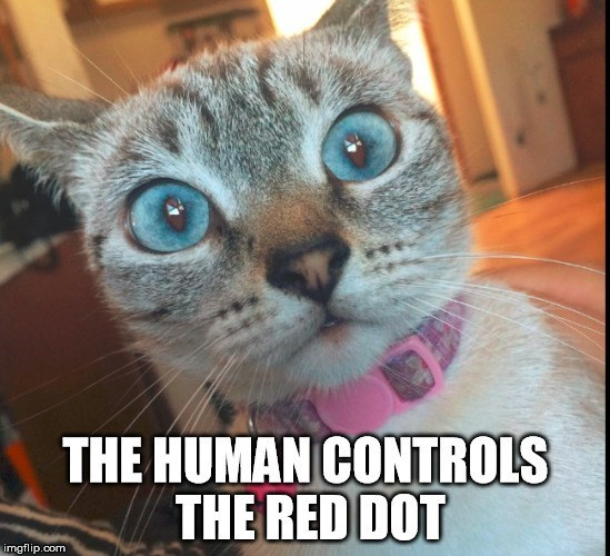 Cat - THE HUMAN CONTROLS THE RED DOT imgflip.com