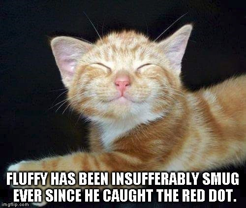 Cat - FLUFFY HAS BEEN INSUFFERABLY SMUG EVER SINCE HE CAUGHT THE RED DOT imgflip.com