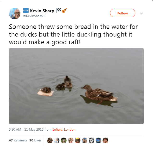 Duck - Kevin Sharp COOL Follow @KevinSharp55 Someone threw some bread in the water for the ducks but the little duckling thought it would make a good raft! 3:50 AM 11 May 2016 from Enfield, London 47 Retweets 90 Likes