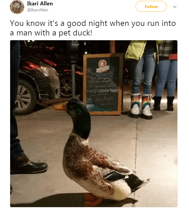 Duck - Ikari Allen Follow @IkariAllen You know it's a good night when you run into a man with a pet duck! N Long Thal heSKETD Doo FRIED CHICKEN ROn