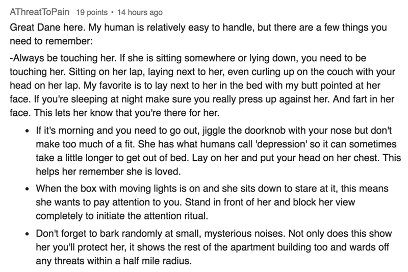 askreddit pets - Text - AThreatToPain Great Dane here. My human is relatively easy to handle, but there are a few things you need to remember: -Always be touching her. If she is sitting somewhere or touching her. Sitting on her lap, laying next to her, even curling up on the couch with your head on her lap. My favorite is to lay next to her in the bed with my butt pointed at her face. If you're sleeping at night make sure you really press up against her. And fart in her face