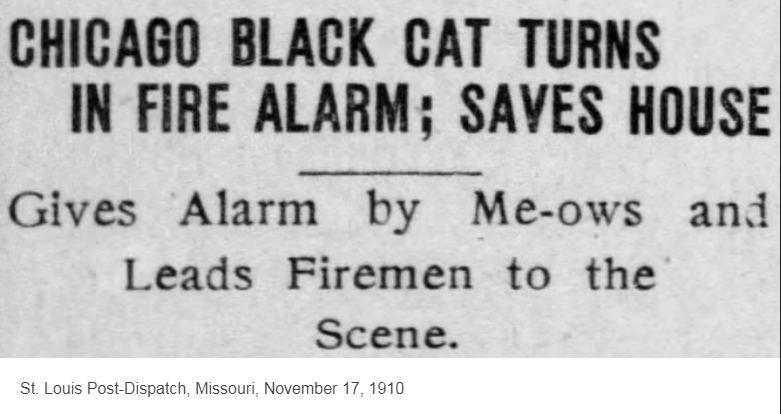 Text - CHICAGO BLACK CAT TURNS IN FIRE ALARM: SAVES HOUSE Gives Alarm by Me-ows and Leads Firemen to the Scene St. Louis Post-Dispatch, Missouri, November 17, 1910