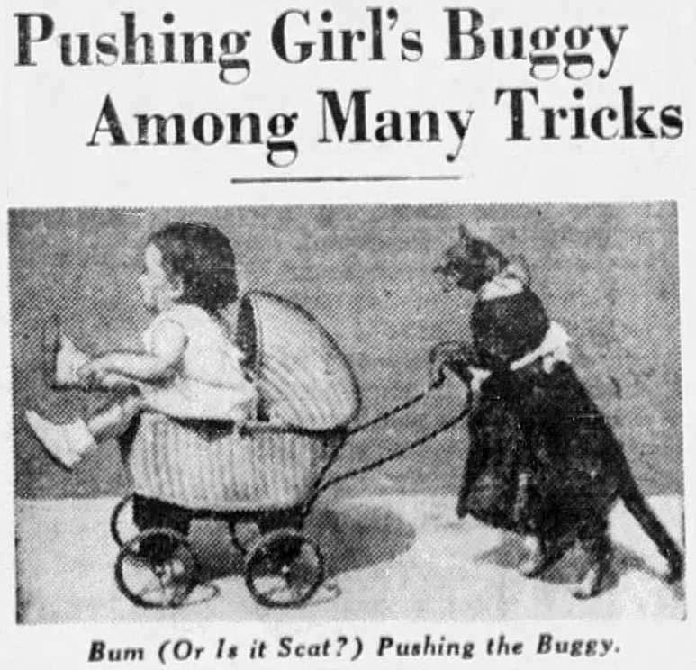 Vintage advertisement - Pushing Girl's Buggy Among Many Tricks Bum (Or Is it Scat?) Pushing the Buggy