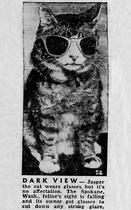 Cat - DARK VIEW Jasper the cat wears glasses but it's no affectation. The Spokane, Wash., feline's sight is failing and its owner got glasses to cut down any strong glare
