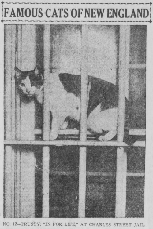 """FAMOUS CATS OF NEW ENGLAND NO. 12-TRUSTY, """"IN FOR LIFE,"""" AT CHARLES STREET JAIL"""