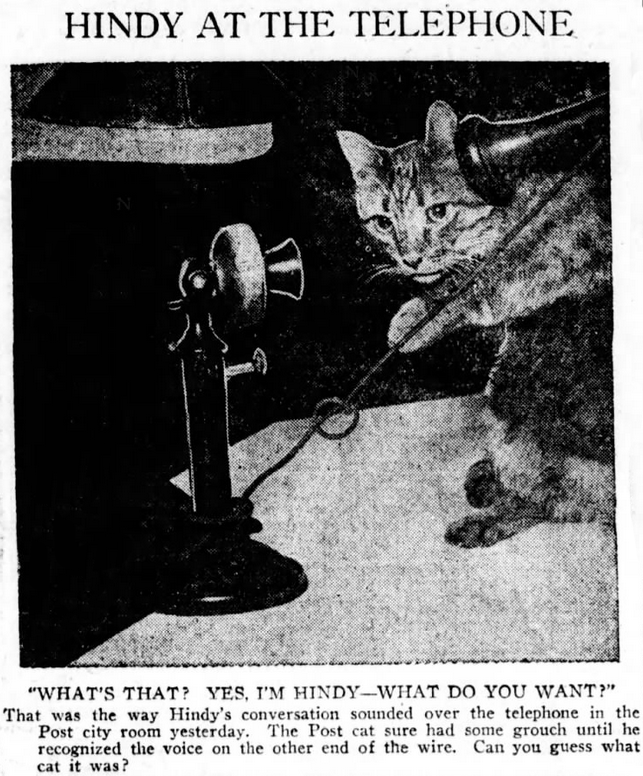 """Vintage advertisement - HINDY AT THE TELEPHONE """"WHAT'S THAT? YES, I'M HINDY--WHAT DO YOU WANT"""" That was the way Hindy's conversation sounded over the telephone in the Post city room yesterday. The Post cat sure had some grouch until he recognized tlhe voice on the other end of the wire. Can you guess what cat it was?"""