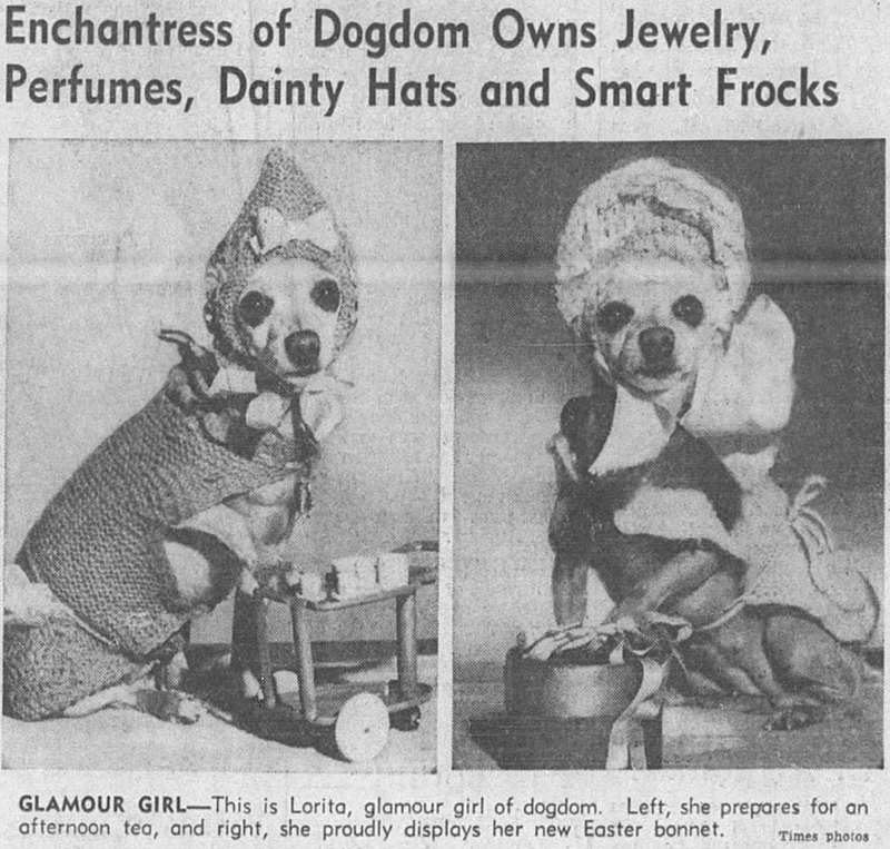 Text - Enchantress of Dogdom Owns Jewelry, Perfumes, Dainty Hats and Smart Frocks GLAMOUR GIRL-This is Lorita, glamour girl of dogdom. Left, she prepares for an afternoon tea, and right, she proudly displays her new Easter bonnet. Times photos