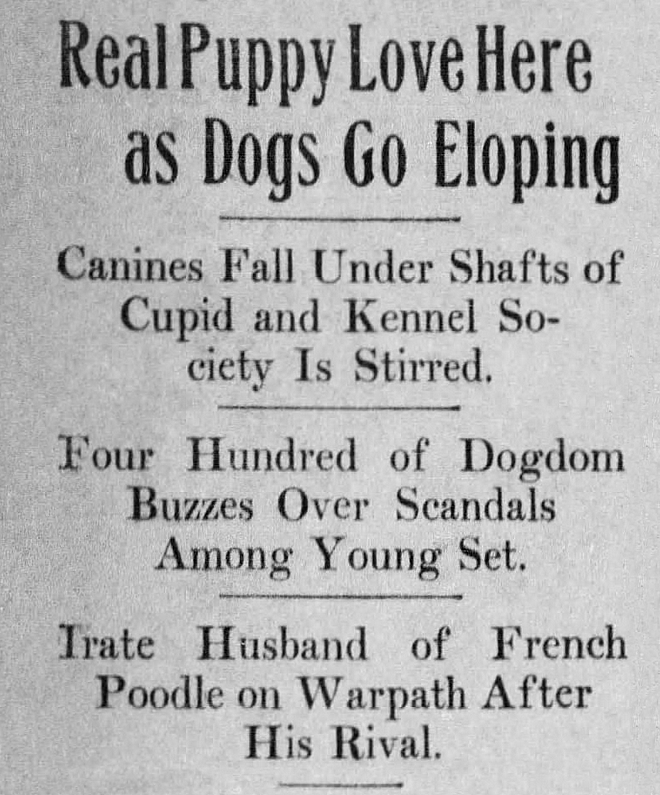 Text - Real Puppy Love Here as Dogs Go Eloping Canines Fall Under Shafts of Cupid and Kennel So- ciety Is Stirred. Four Hundred of Dogdom Buzzes Over Scandals Among Young Set. Irate Husband of French Poodle on Warpath After His Rival