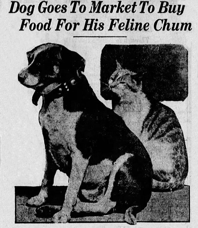 Dog - Dog Goes To Market To Buy Food For His Feline Chum