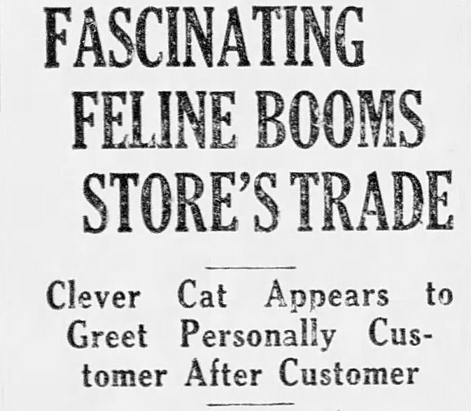 Font - FASCINATING FELINE BOOMS STORE'S TRADE Clever Cat Appears to Greet Personally Cus tomer After Customer