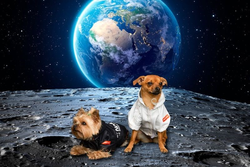 Clothes for dogs Nasa