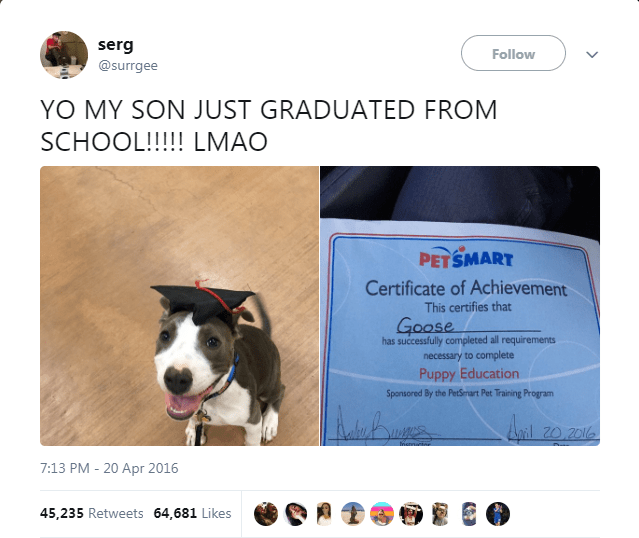 Canidae - serg @surrgee Follow YO MY SON JUST GRADUATED FROM SCHOOL!!! LMAO PETSMART Certificate of Achievement This certifies that Goose has successfully completed all requirements necessary to complete Puppy Education Sponsored By the PetSenart Pet Training Program 20.2016 7:13 PM - 20 Apr 2016 45,235 Retweets 64,681 Likes