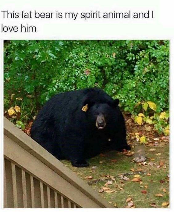 Bear - This fat bear is my spirit animal and I love him