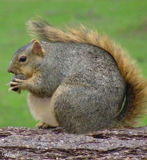 Mammal - Warh 1000 pom