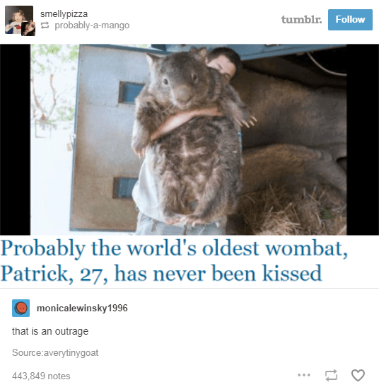 screenshot of news article about world's oldest wombat never been kissed