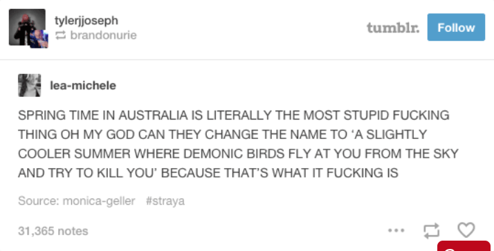text from tumblr about spring time being less hot and when birds try to kill you