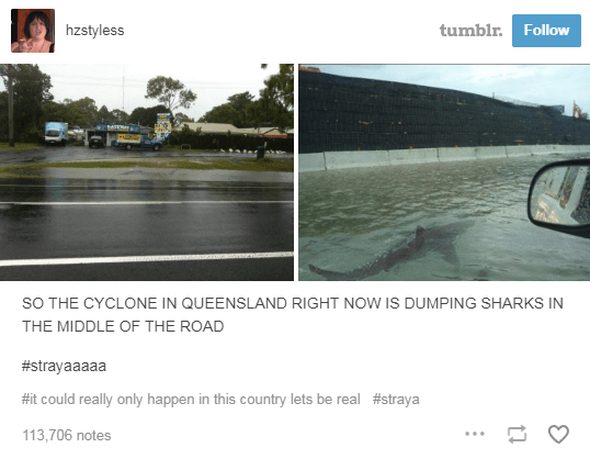 main road flooded by cyclone sharks swimming in the water