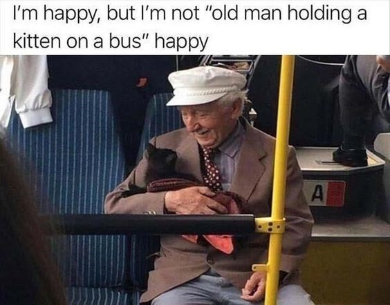 """kitten meme - Photo caption - I'm happy, but I'm not """"old man holding a kitten on a bus"""" happy A"""