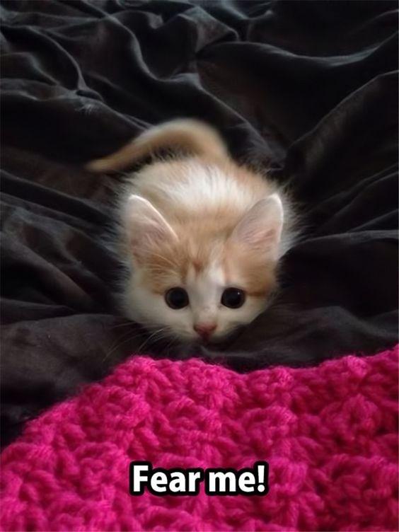 kitten meme - Cat - Fearme!