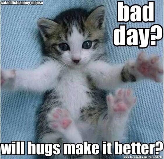 kitten meme - Cat - cataddictsanony-mouse bad day? will hugs make it better? www.facebook.com/cataddicts