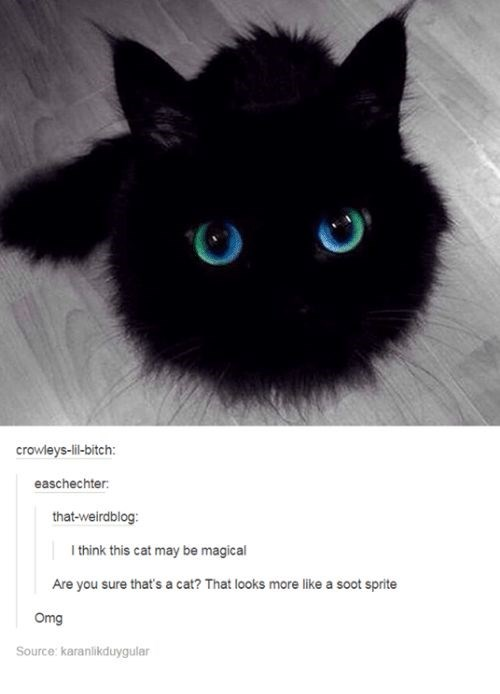 kitten meme - Cat - crowleys-lil-bitch: easchechter: that-weirdblog: I think this cat may be magical Are you sure that's a cat? That looks more like a soot sprite Omg Source: karanlikduygular