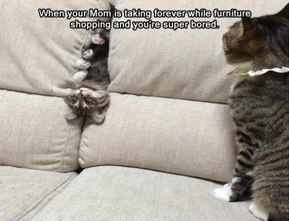 kitten meme - Cat - When your Mom is taking forever while furniture shopping and youte super bored.