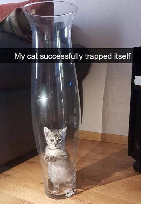 kitten meme - Cat - My cat successfully trapped itself