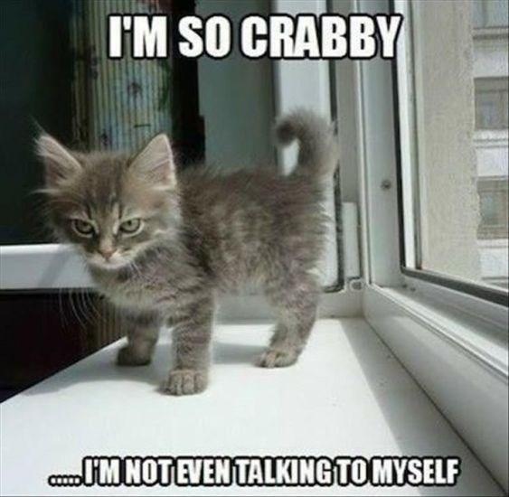 kitten meme - Cat - I'M SO CRABBY CMNOTEVEN TALKINGTOMYSELF