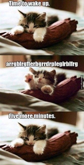 kitten meme - Cat - Time to wake up. arrgblrgflerbgrrdrplegirblfrg Five more minutes. memebinge.com