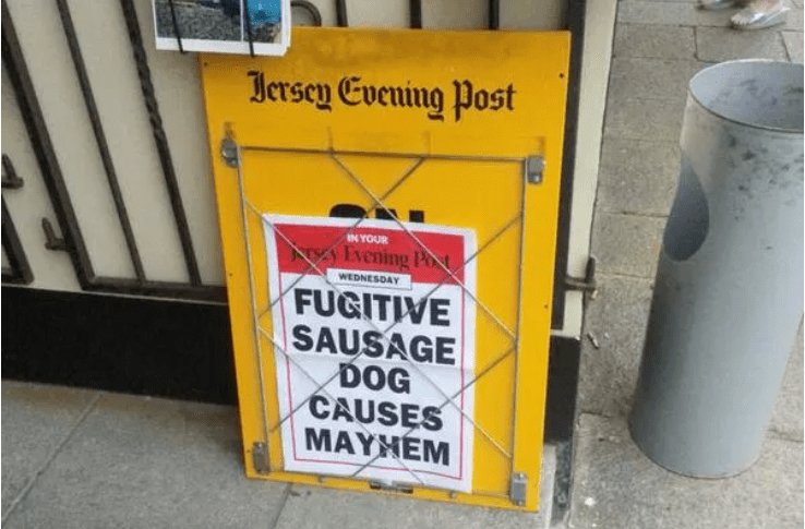 Yellow - Hersey Evening Post IN YOUR Evening Pot WEDNESDAY FUGITIVE SAUSAGE DOG CAUSES MAYHEM