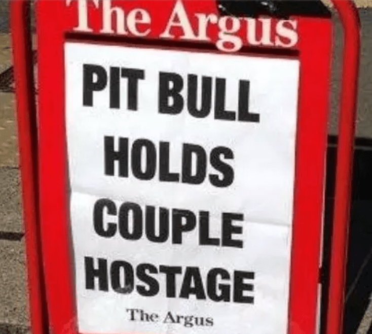 Font - The Argus PIT BULL HOLDS COUPLE HOSTAGE The Argus