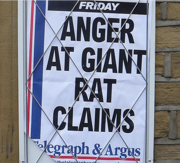 Font - FRIDAY ANGER AT GIANT RAT CLAIMS elegraph &Argus theteleaanhau