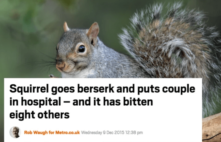 Squirrel - Squirrel goes berserk and puts couple in hospital- and it has bitten eight others Rob Waugh for Metro.co.uk Wednesday 9 Dec 2015 12:38 pm
