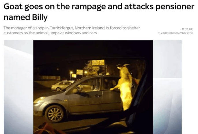 Motor vehicle - Goat goes on the rampage and attacks pensioner named Billy The manager of a shop in Carrickfergus, Northern Ireland, is forced to shelter customers as the animal jumps at windows and cars. 11:32 UK Tuesday 06 December 2016