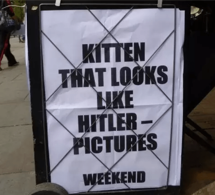 Font - KITTEN THAT LOOKS НКЕ HITLER PICTURES WEEKEND