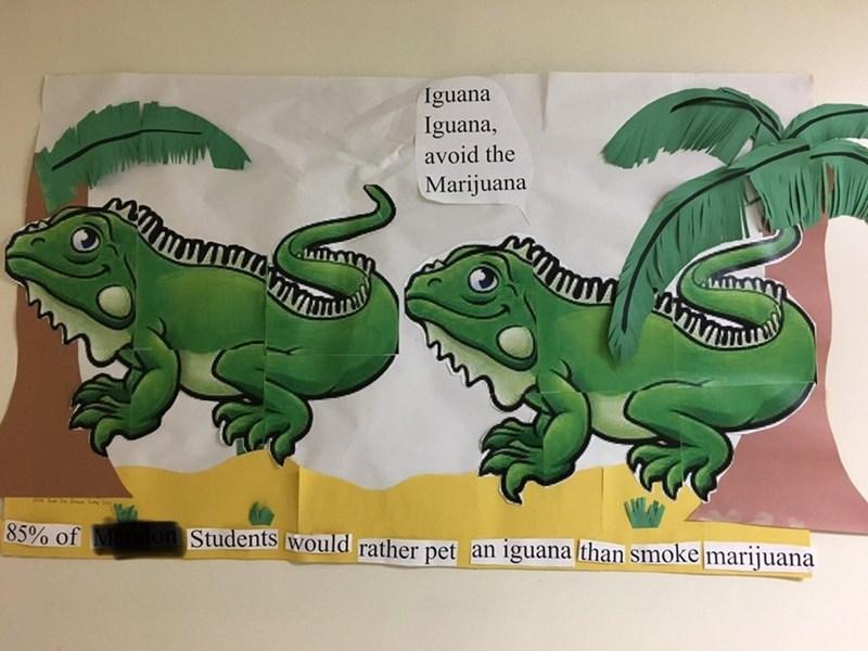 Green - Iguana Iguana, avoid the Marijuana 85% of lon Students would rather pet an iguana lthan smoke marijuana