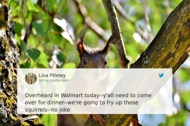 Squirrel - Lisa Pinney FriedpieRecipes Overheard in Walmart today--y'all need to come over for dinner-we're going to fry up those squirrels--no joke