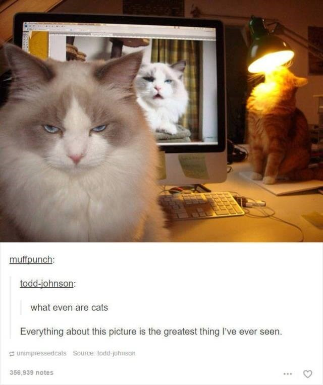 funny tumblr post animals angry cat cat on laptop and cat looking into lamp what even are cats Everything about this picture is the greatest thing I've ever seen.