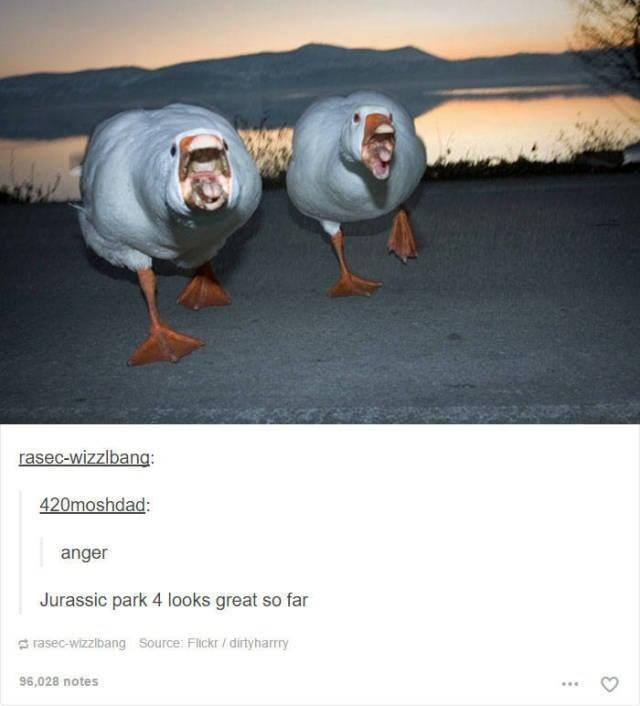 funny tumblr post animals two geese running towards camera scary Jurassic park 4 looks great so far