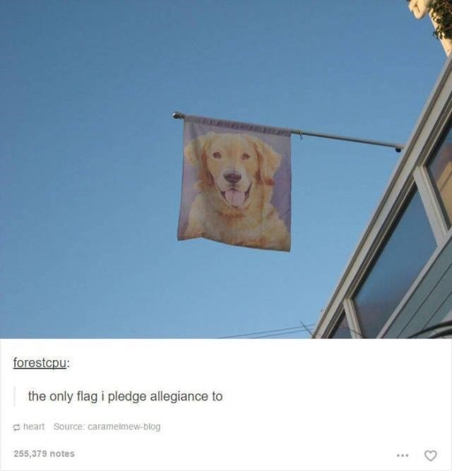funny tumblr post animals picture of dog on flag the only flag i pledge allegiance to