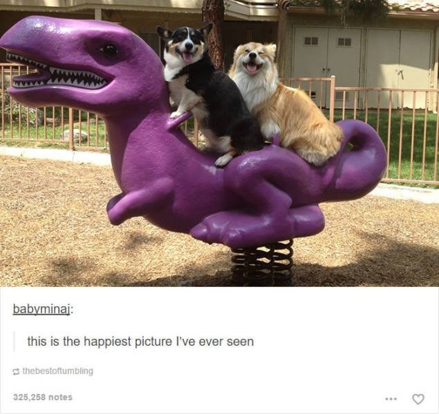 funny tumblr post animals two dogs sitting on dinosaur toy at the playground this is the happiest picture I've ever seen