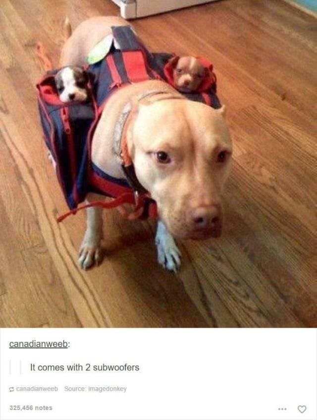 dog wearing suit that has two pouches on either side with puppies in it funny tumblr post animals It comes with 2 subwoofers