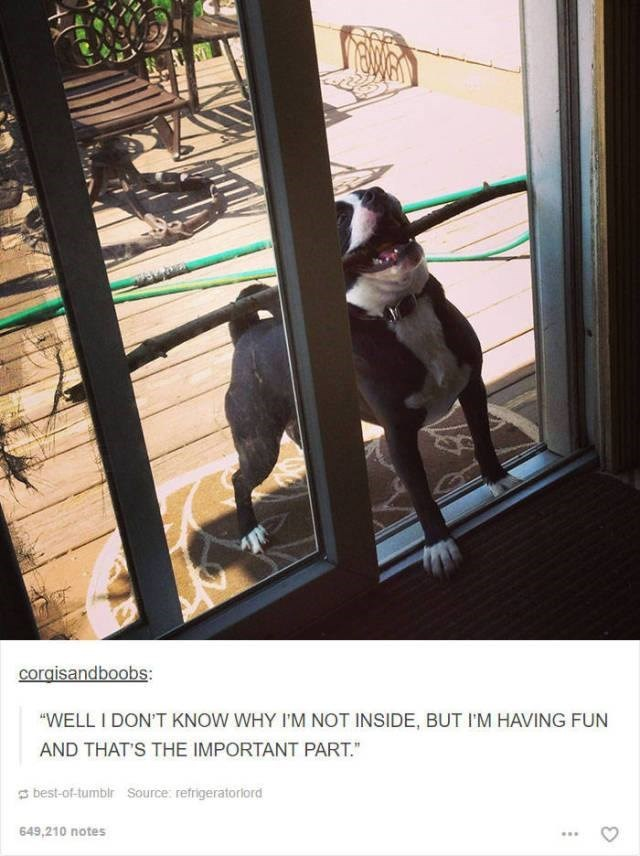 "dog trying to bring horizontal stick inside small door funny tumblr post animals ""WELL I DON'T KNOW WHY I'M NOT INSIDE, BUT I'M HAVING FUN AND THAT'S THE IMPORTANT PART."""