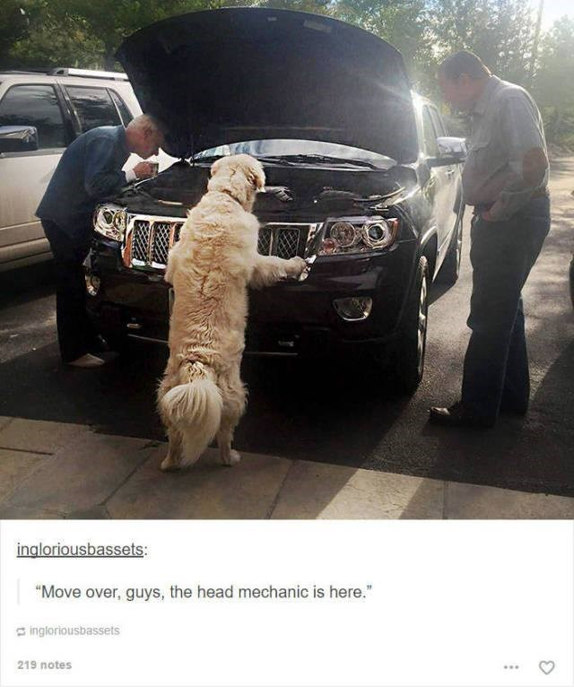"dog leaning up to look at car bonnet like mechanic funny tumblr post animals ""Move over, guys, the head mechanic is here."""