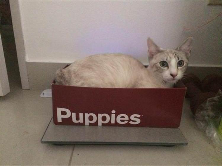 Cat - Puppies