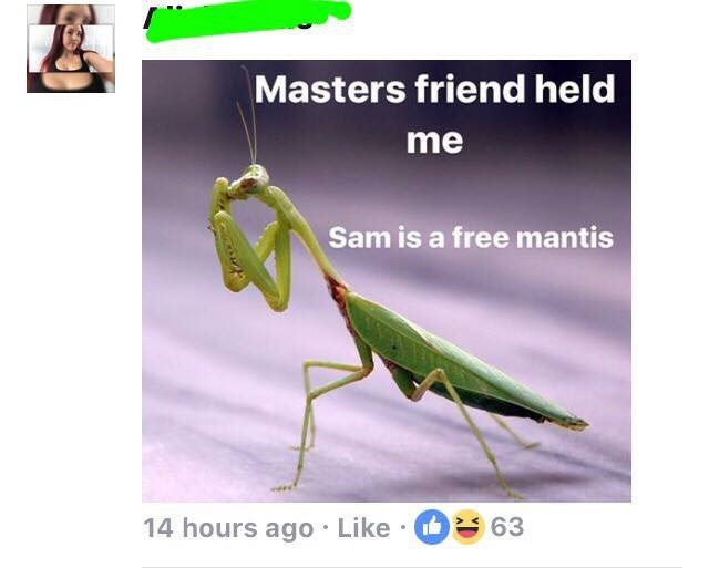 Insect - Masters friend held me Sam is a free mantis 63 14 hours ago Like