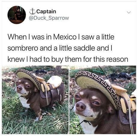 dog meme of a chihuahua dog dressed in tiny sombrero