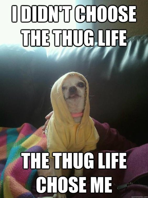dog meme about thug life with picture of chihuahua dog wearing a hoodie
