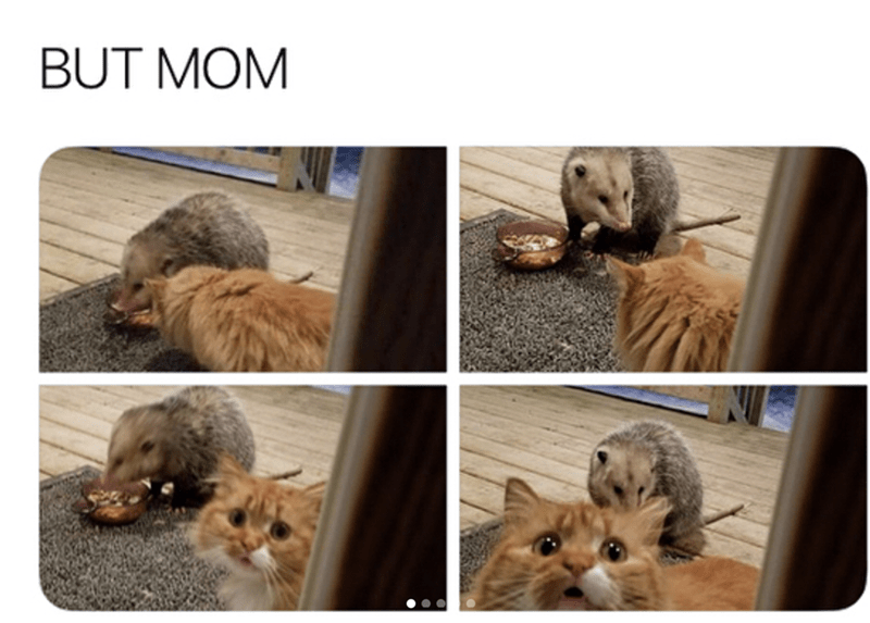 Cat - BUT MOM